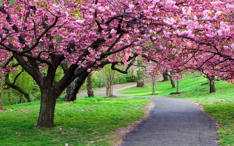 beautiful-nature-wallpapers_042326279_304