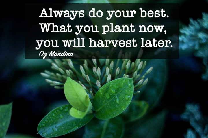 You Will Harvest What YouPlant